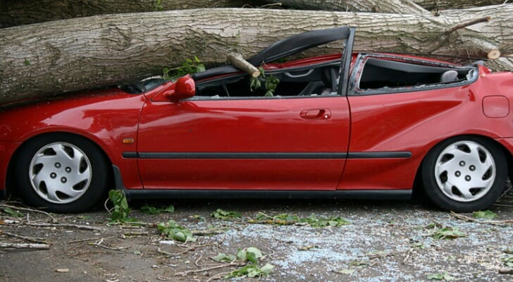 Car crushed by a fallen tree